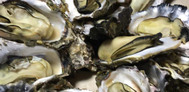 牡蠣捌き〜🦪